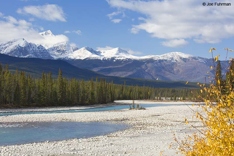 Athabasca River Jasper National Park, AB, Canada Oct. 2013