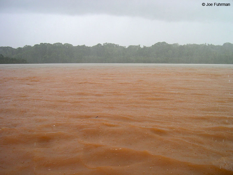 Brutal rain on Tambopata River Tambopata Reserve, Peru   January 2004