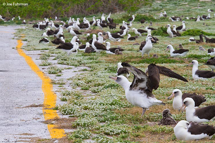 Edge of runway Midway Atoll, HA March 2010