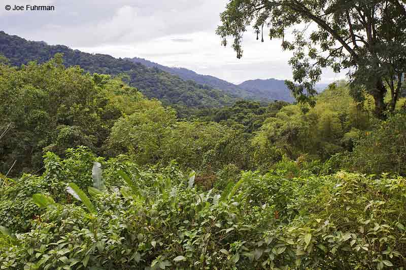 Asa Wright Nature Center-view of Arima Valley Trinidad And Tobago Dec. 2012
