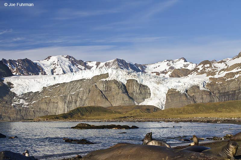 Cooper Bay, South Georgia Island Nov. 2010