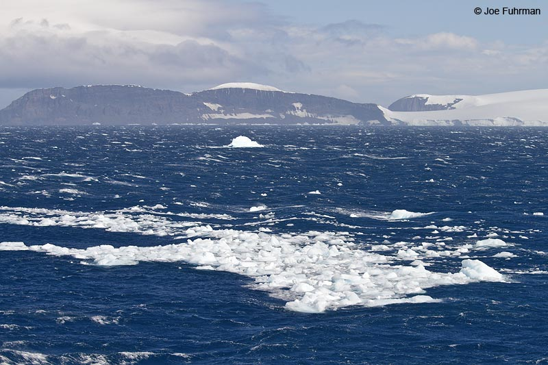 Half Moon Island South Shetland Islands (sub Antarctic) Nov. 2010