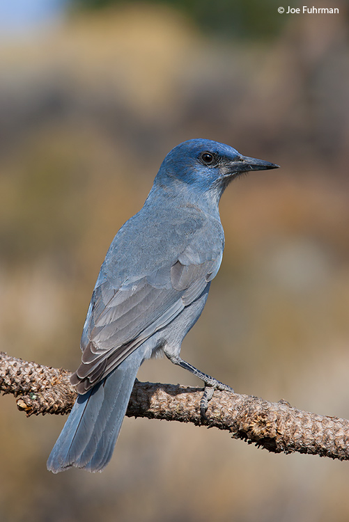 Pinyon Jay Lake Co., OR   October 2006
