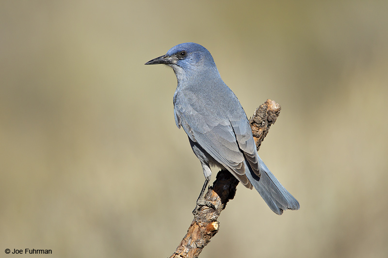 Pinyon Jay Lake Co., OR   Sept. 2010