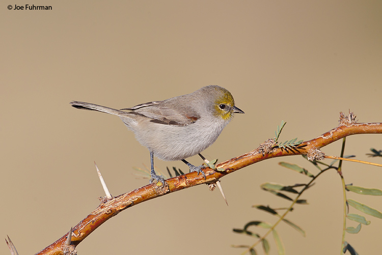 Verdin Clark Co., NV Nov. 2011