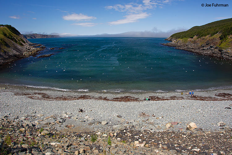 Outer Cove, Newfoundland, Canada August 2011