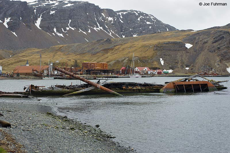 Grytviken, South Georgia Island Nov. 2010