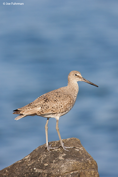 Willet L.A. Co., CA April 2008