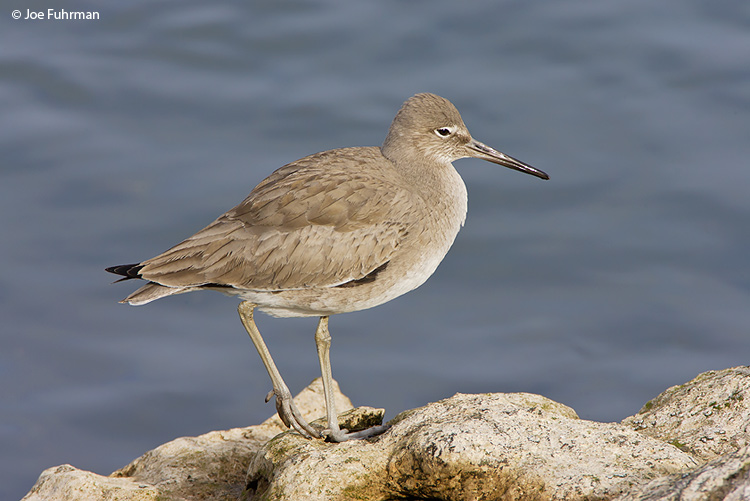 Willet L.A. Co., CA February 2008