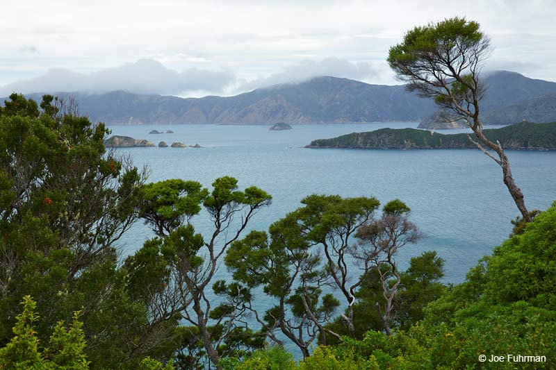 Queen Charlotte Sound, New Zealand   Dec. 2014