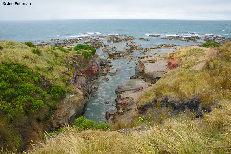 Shag Point near Dunebin, New ZealandNov. 2014