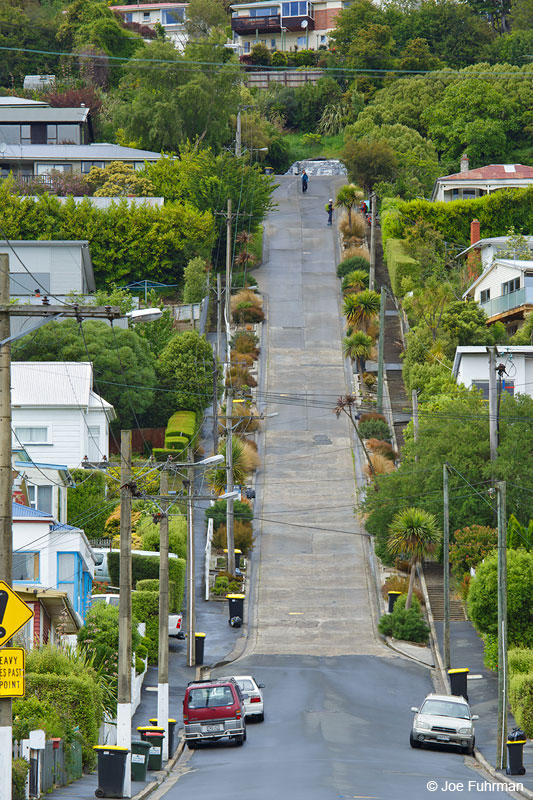 Baldwin St.-steepest street in the world. Dunedin, NZ   Nov. 2014